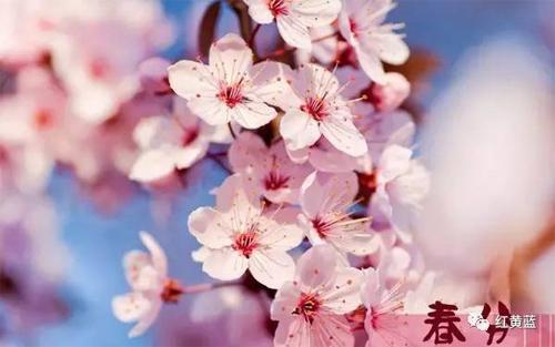 【春分】心若向阳,春暖亦花开