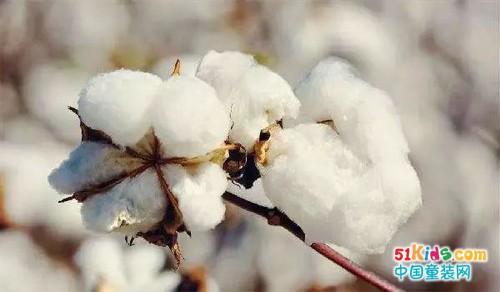一株棉花經歷40個工序竟是為了......