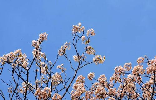 快乐丘比——4月伊始 清明时分