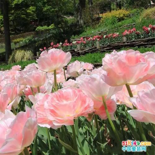 色彩研究室丨关于夏天/ 花/ 与诗