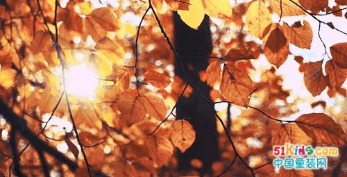 冬天和秋天之间隔着一件毛衣的温暖…